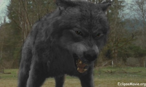 Leah en loup